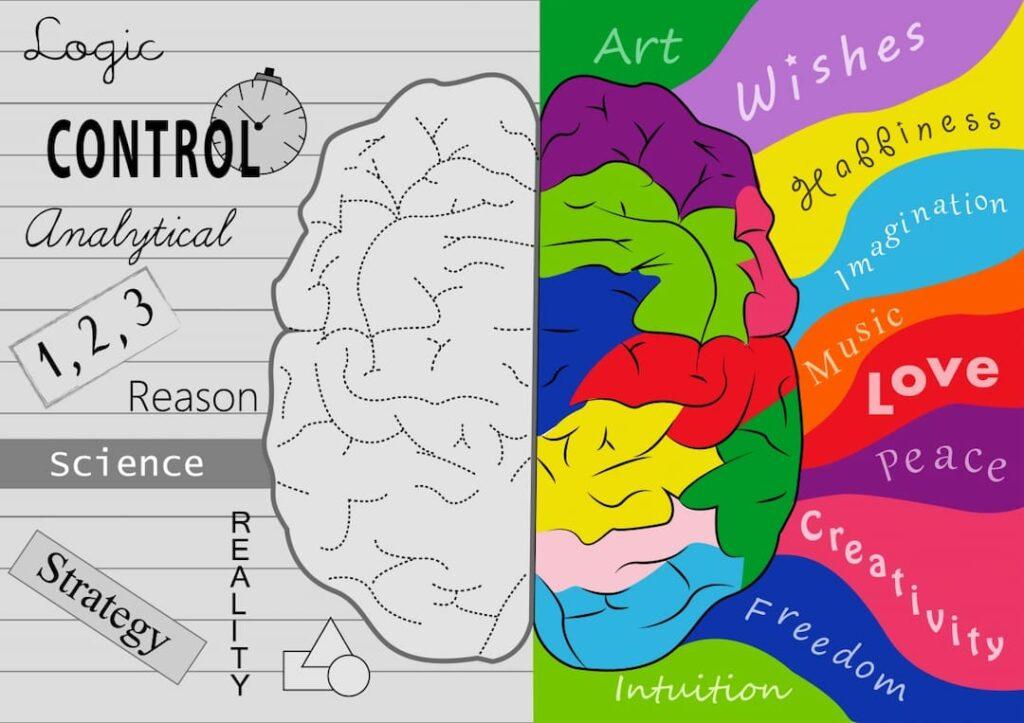 left and right brain hemisphere illustration