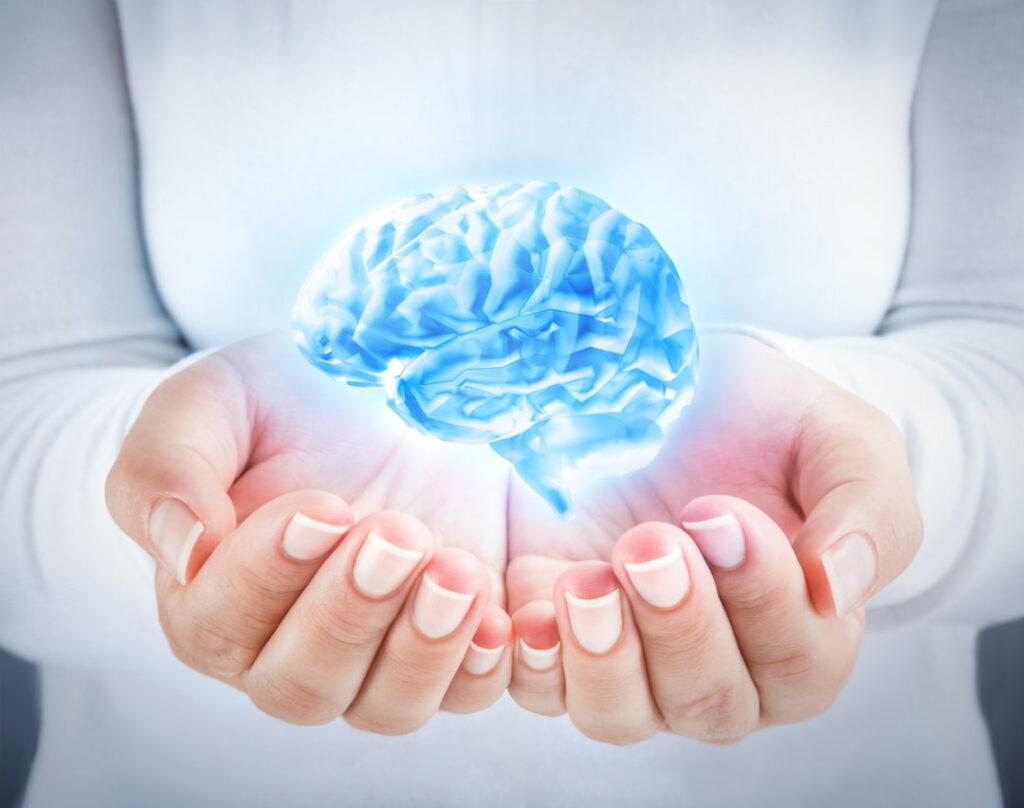 a human brain model in female hands